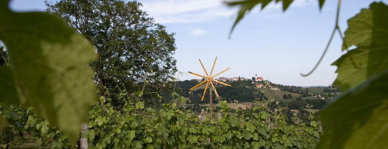 Weingarten Weinhof Ulrich in St. Anna am Aigen
